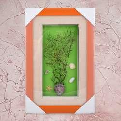картина з морських черепашок на зеленому тлі 24х37